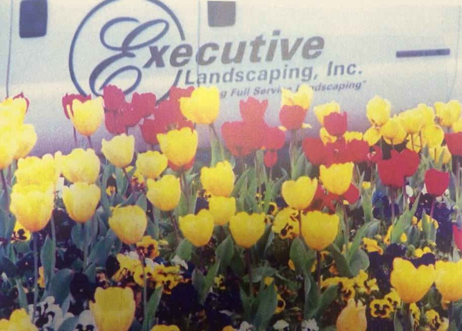 6 Steps to a Successful Spring Tulip Garden